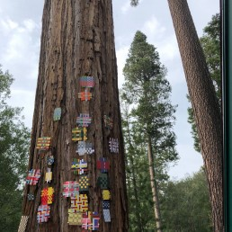 Installation View 1 - 2018 | Found paper on tree | Lake Tahoe, CA