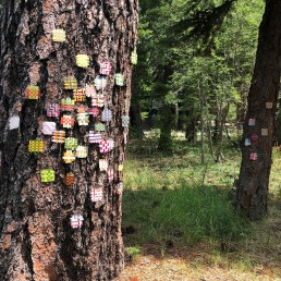 Installation View 2 - 2018 | Found paper on tree | Lake Tahoe, CA