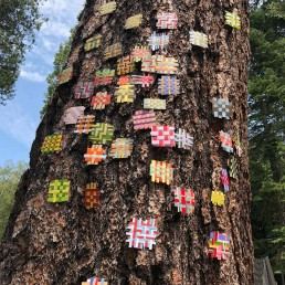 Site Specific Installation - 2018 | Found paper on tree | Lake Tahoe, CA